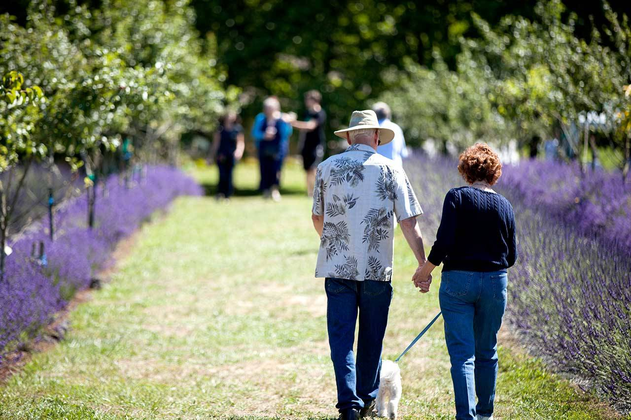 """""""It's just a fun way for our neighbors and community to get together,"""" organizer Matt Kelley said of the Kingston Lavender Festival. (Tasha Vanasse / Contributed)"""